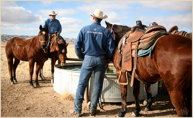 ranch_rodeo_2